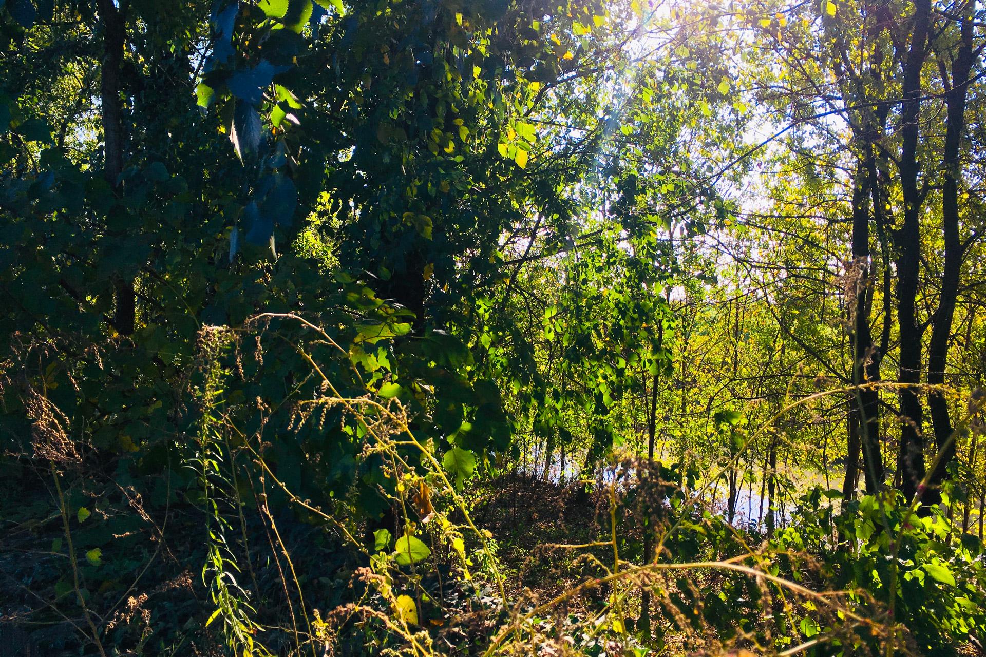 Cartura_scorcio della vegetazione campestre