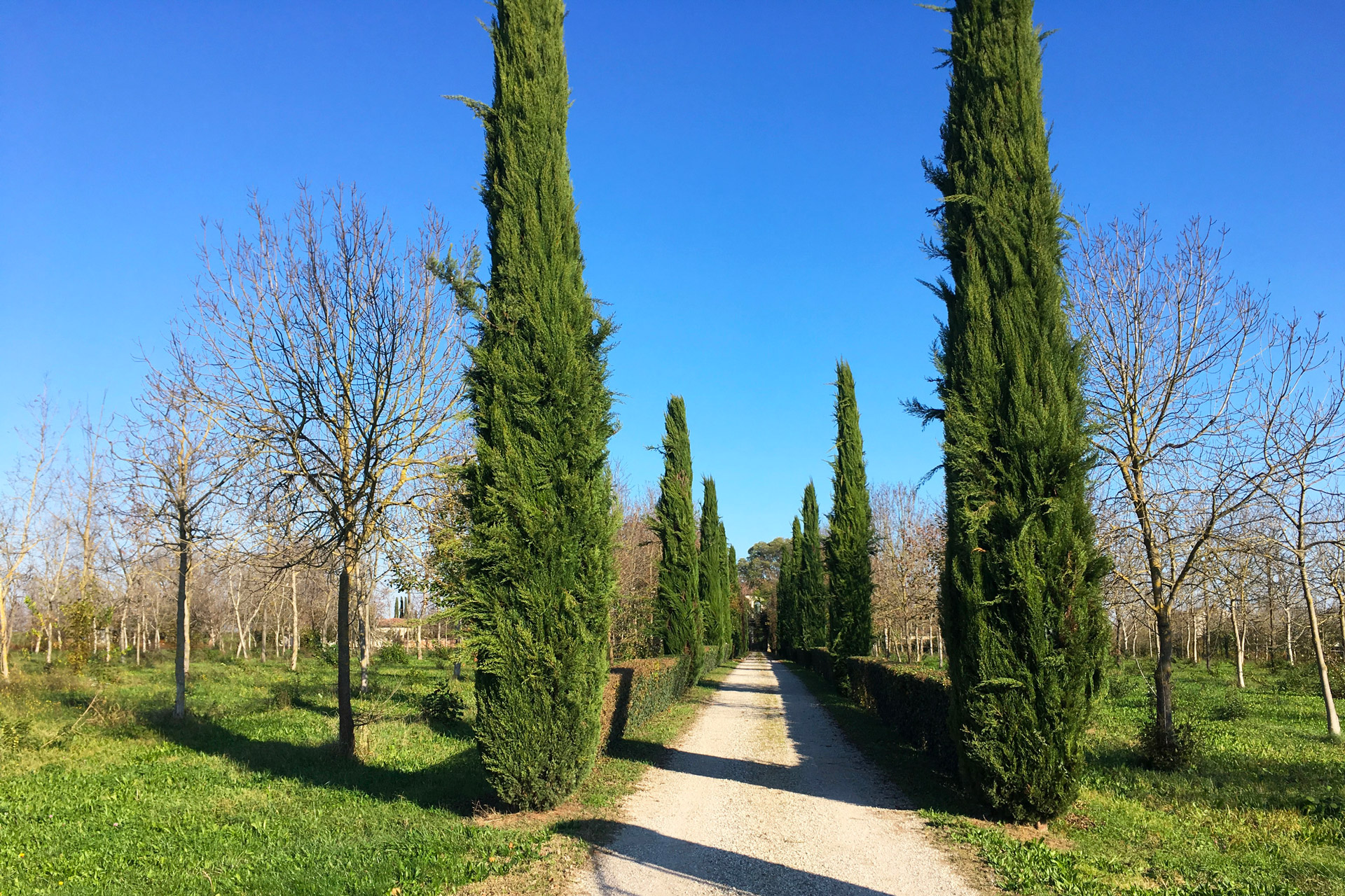 Cartura_Viale di Villa Mocenigo-Randi