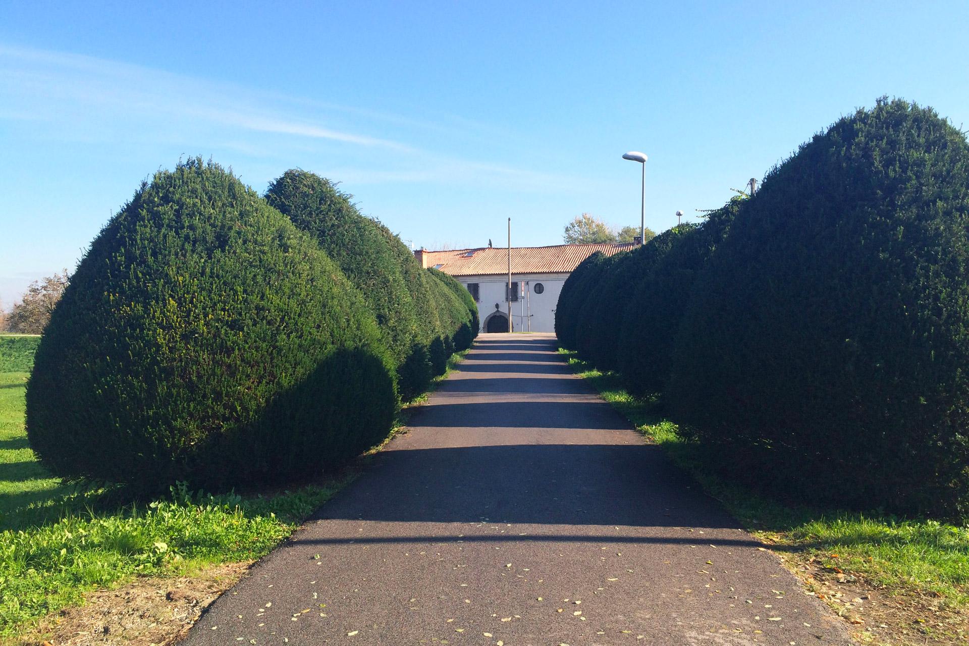 Pernumia_Viale nei pressi di Via Palù Inferiore